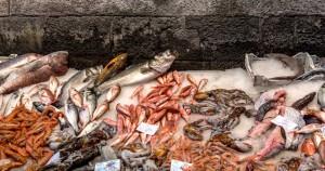 Fischmarkt Catania - Meeresfrüchte