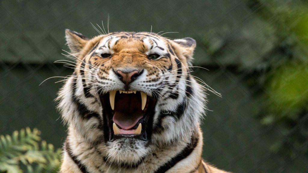 Datum: 2017:05:21 16:28:20 Tiere,animals,Vogel,birds,green,grün,tiger,elephant,giraffe,maus,katze,cat,dog,hund,zoo,storch,affe,gorilla,zaun,fence,gehege,pferd,horse,zebra,kamel,camel,kuh,stier,cow,tierpark,flickr,stern-view,Photography,LRE Photography,laurenc,laurenc riese,Nikon D5,Nikon,www.lriese.ch,lre,lriese,