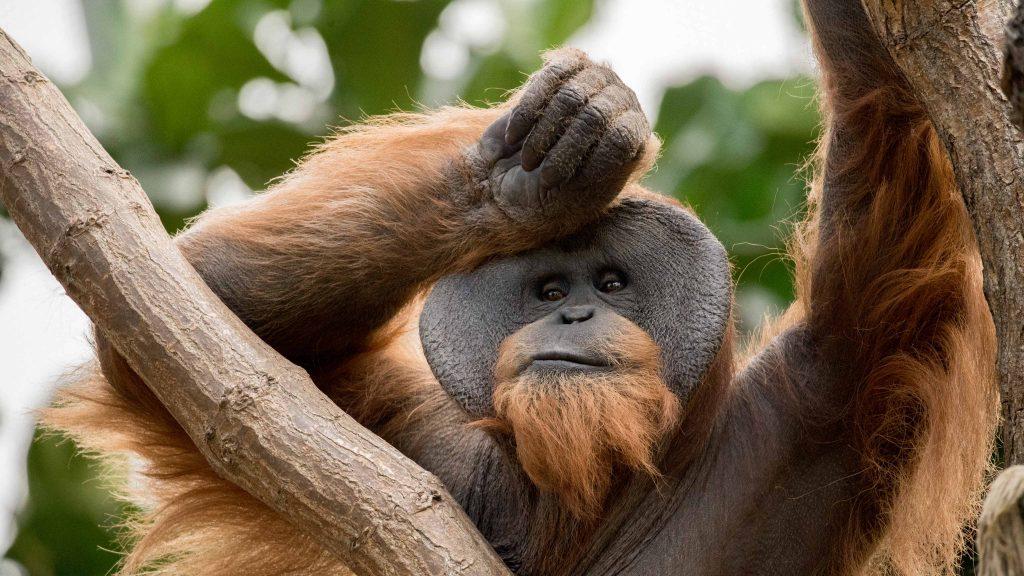Datum: 2017:05:21 16:43:26 Tiere,animals,Vogel,birds,green,grün,tiger,elephant,giraffe,maus,katze,cat,dog,hund,zoo,storch,affe,gorilla,zaun,fence,gehege,pferd,horse,zebra,kamel,camel,kuh,stier,cow,tierpark,flickr,stern-view,Photography,LRE Photography,laurenc,laurenc riese,Nikon D5,Nikon,www.lriese.ch,lre,lriese,