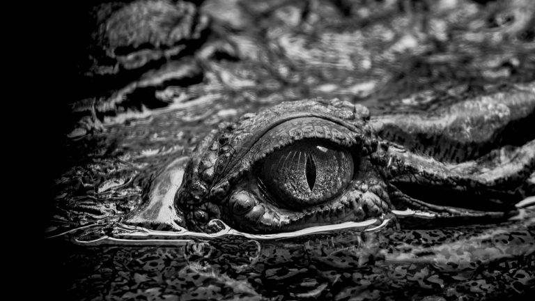 Low-Key Krokodil