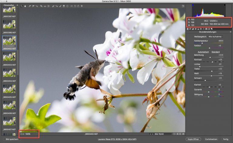 Nikon D850 & Sigma S – Kolibri (schwärmer) – Zoom auf 100% Bildschirmgrösse