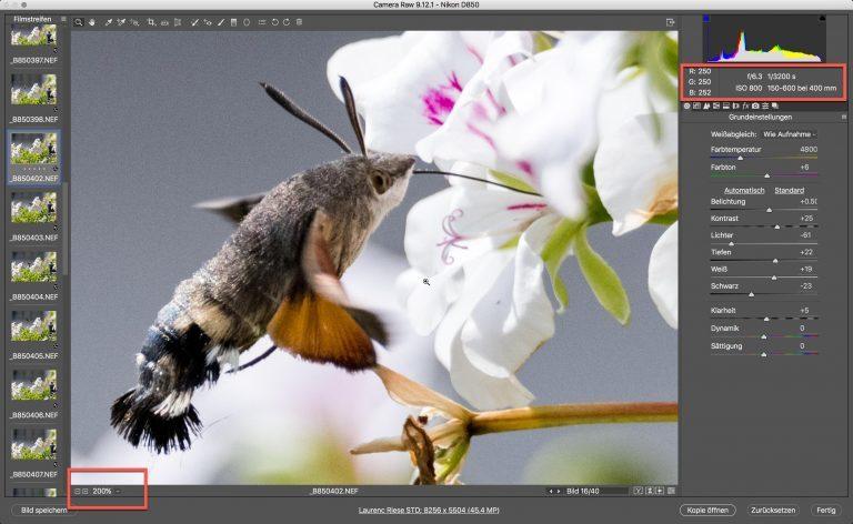 Nikon D850 & Sigma S – Kolibri (schwärmer) – Zoom auf 200% Bildschirmgrösse