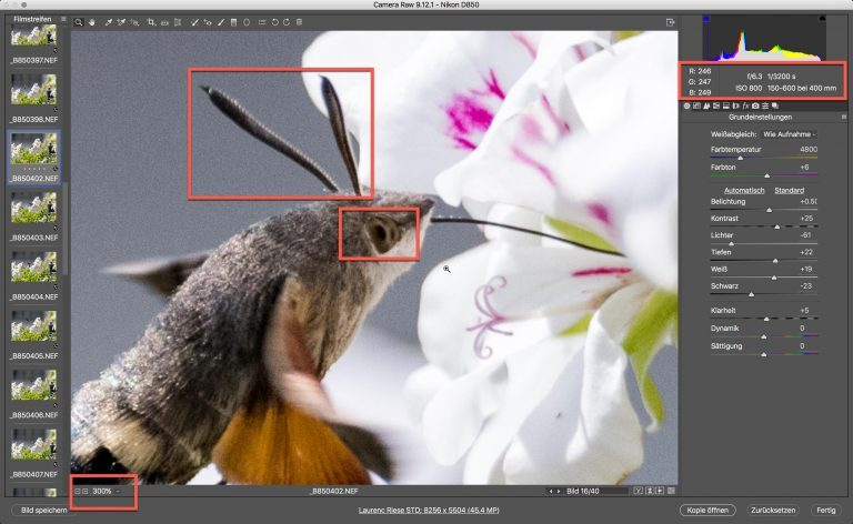Nikon D850 & Sigma S – Kolibri (schwärmer) – Zoom auf 300% Bildschirmgrösse