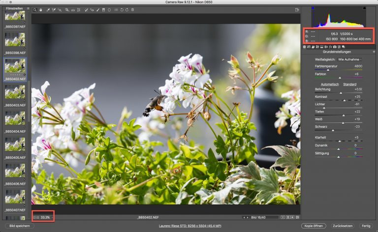 Nikon D850 & Sigma S – Kolibri (schwärmer) – Zoom auf 33% Bildschirmgrösse